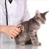 Ветеринарные клиники в Алатыре